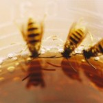 Wespen im Getränk